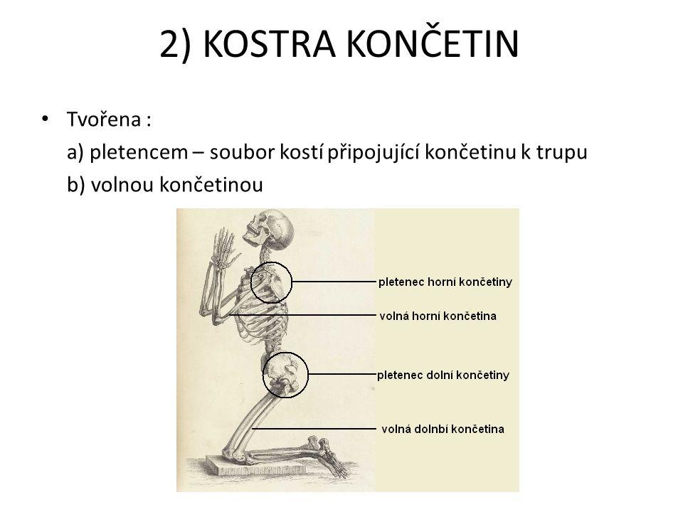2) KOSTRA KONČETIN Tvořena :