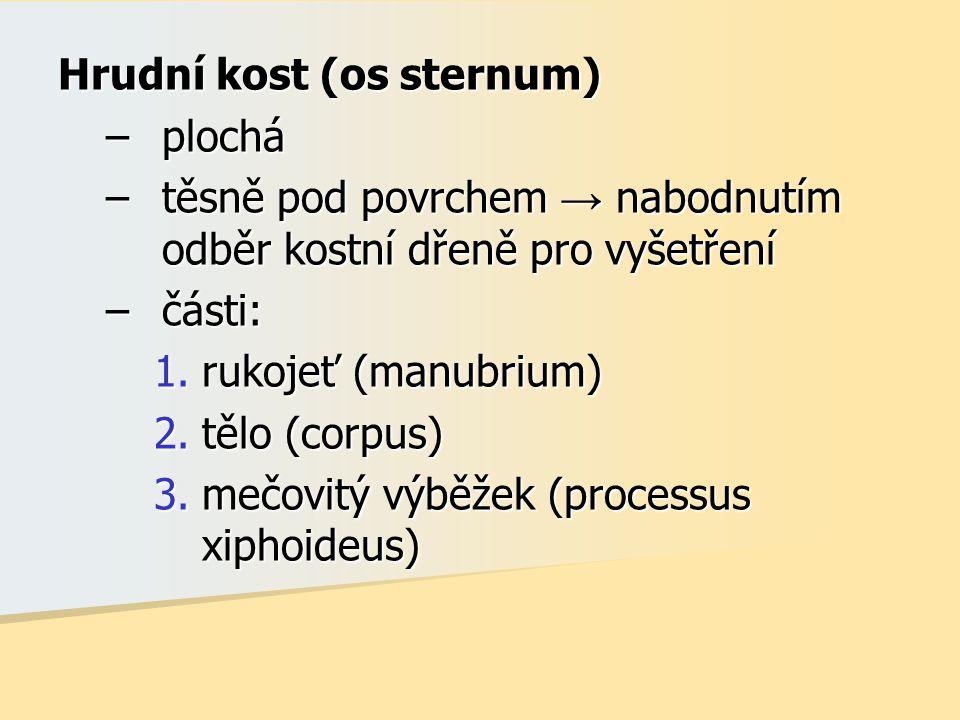 Hrudní kost (os sternum)