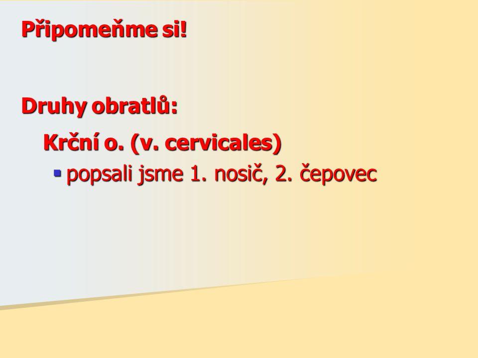 Připomeňme si! Druhy obratlů: Krční o. (v. cervicales) popsali jsme 1. nosič, 2. čepovec