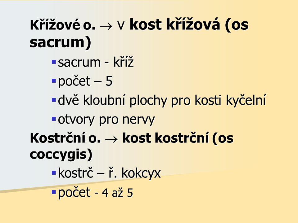 Křížové o.  v kost křížová (os sacrum)