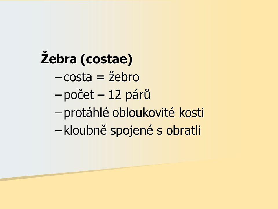 Žebra (costae) costa = žebro počet – 12 párů protáhlé obloukovité kosti kloubně spojené s obratli