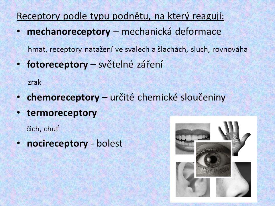 hmat, receptory natažení ve svalech a šlachách, sluch, rovnováha zrak
