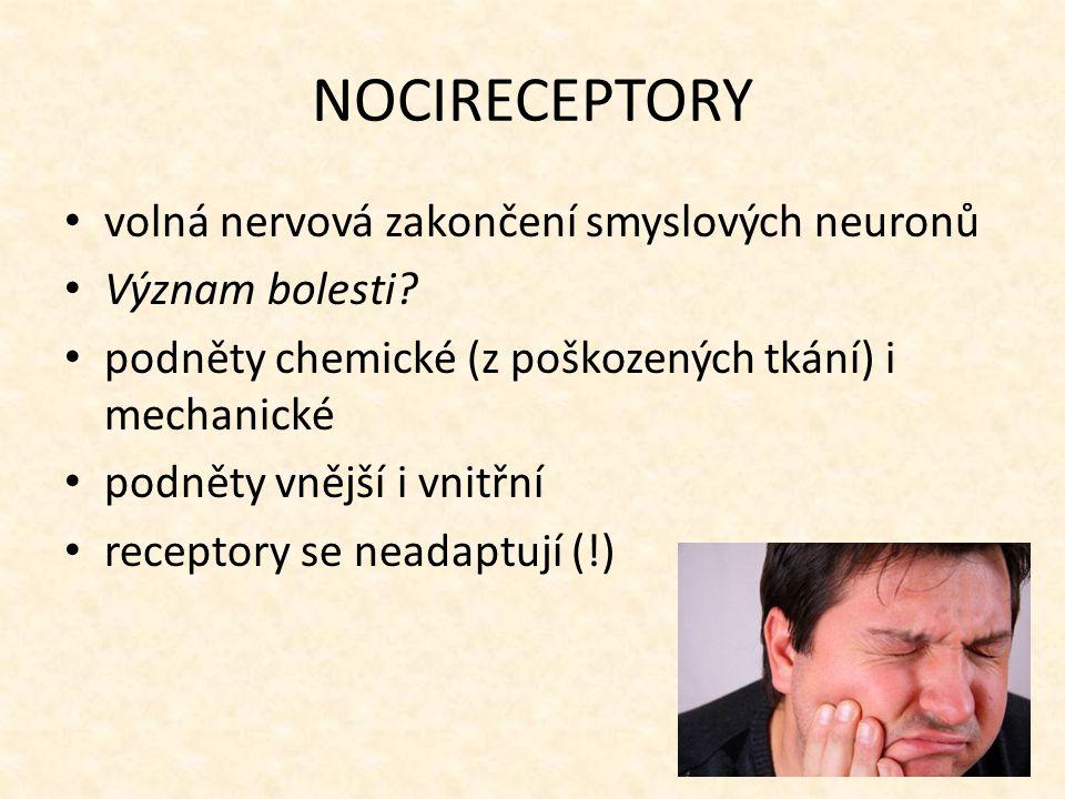 NOCIRECEPTORY volná nervová zakončení smyslových neuronů
