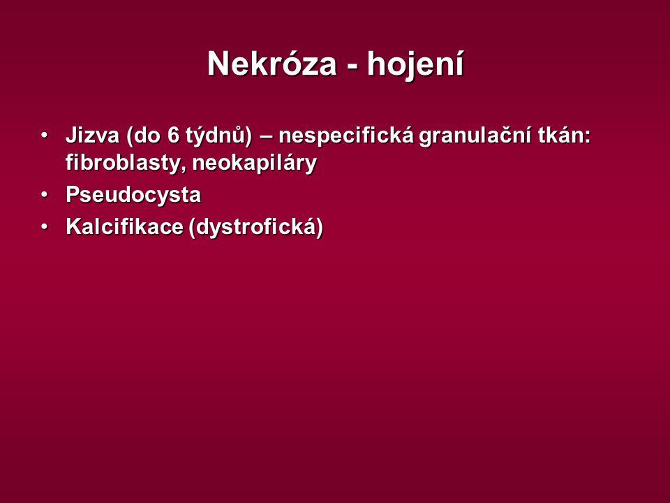 Nekróza - hojení Jizva (do 6 týdnů) – nespecifická granulační tkán: fibroblasty, neokapiláry. Pseudocysta.
