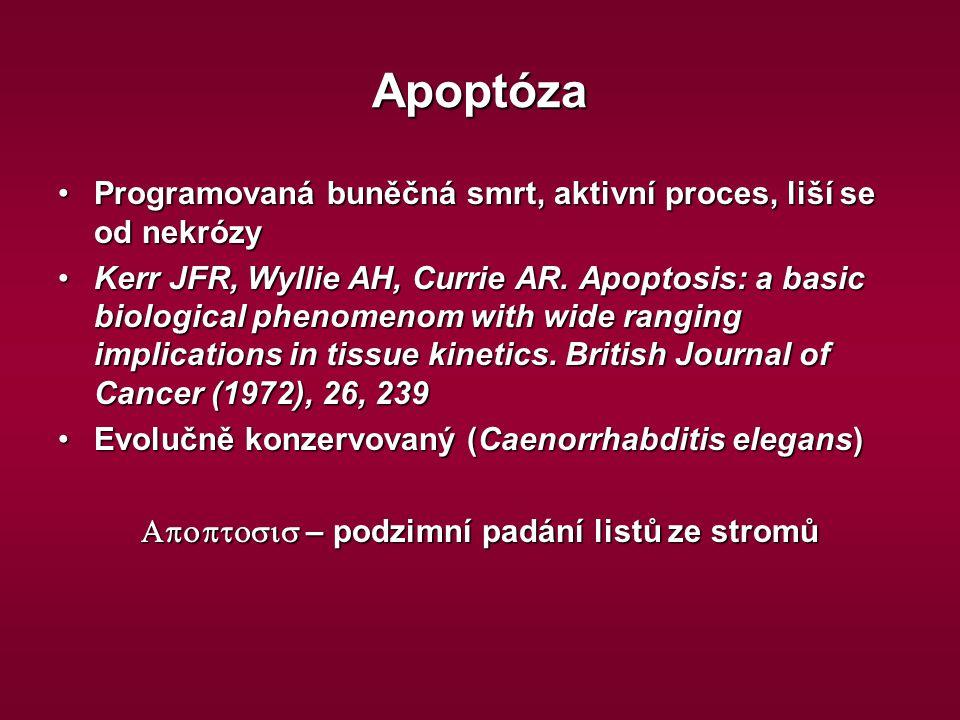 Apoptosis – podzimní padání listů ze stromů