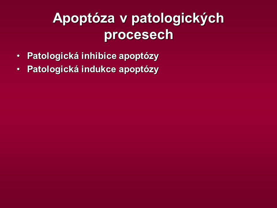 Apoptóza v patologických procesech