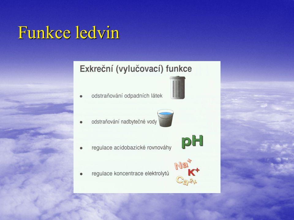 Funkce ledvin