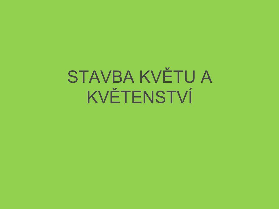 STAVBA KVĚTU A KVĚTENSTVÍ