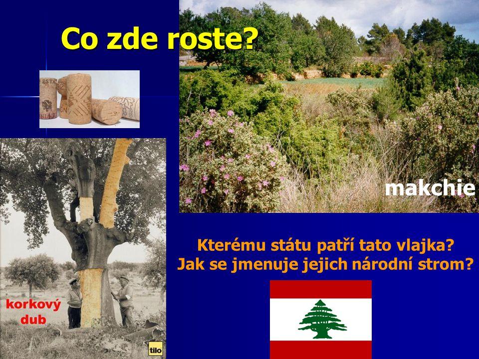 Kterému státu patří tato vlajka Jak se jmenuje jejich národní strom