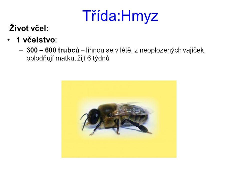 Třída:Hmyz Život včel: 1 včelstvo: