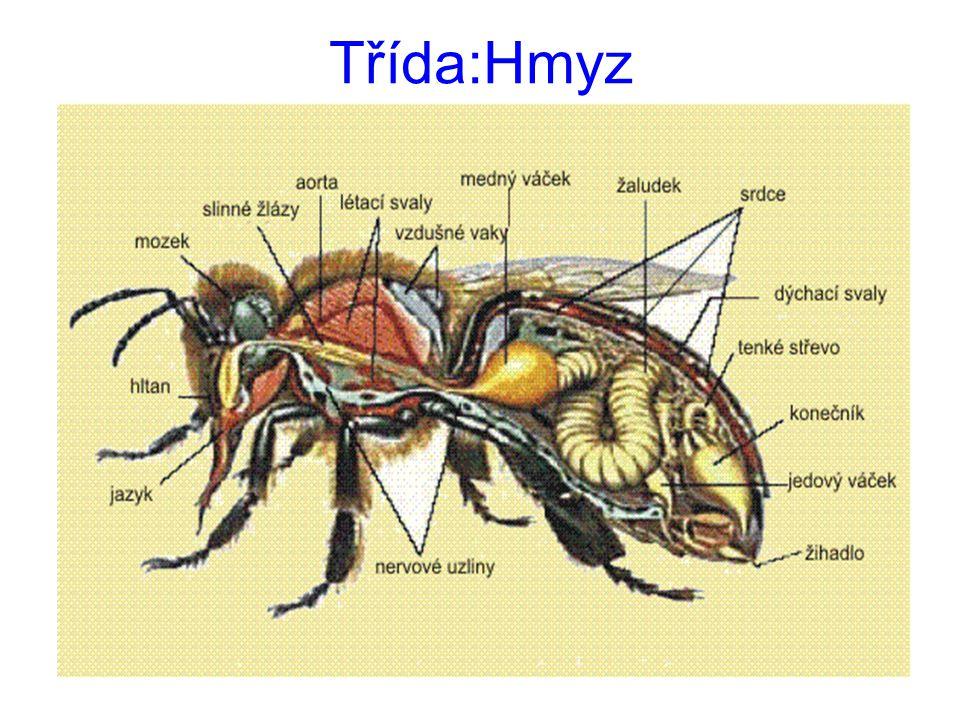 Třída:Hmyz