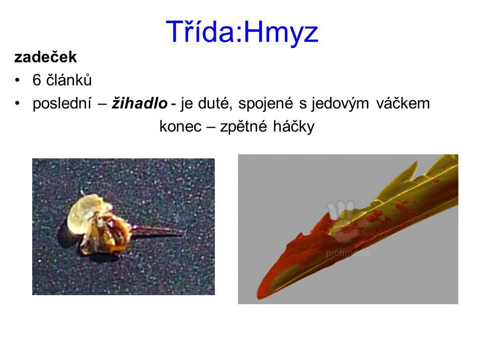 Třída:Hmyz zadeček 6 článků