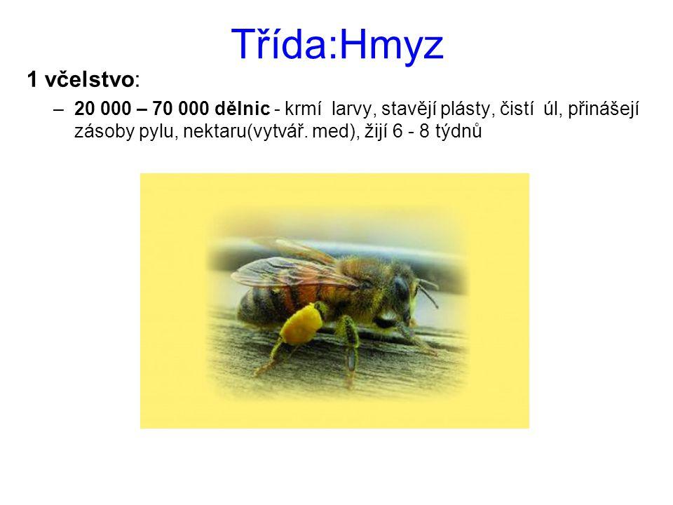 Třída:Hmyz 1 včelstvo: