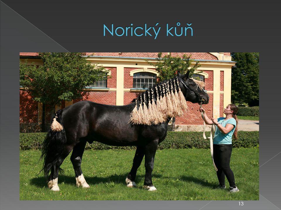 Norický kůň