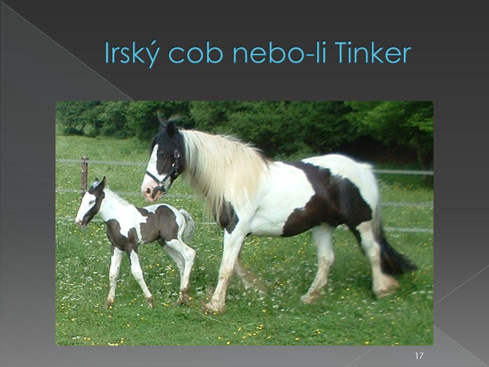 Irský cob nebo-li Tinker