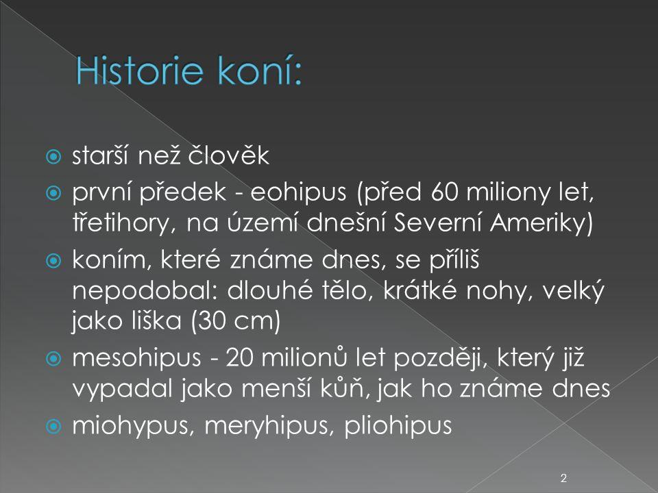 Historie koní: starší než člověk