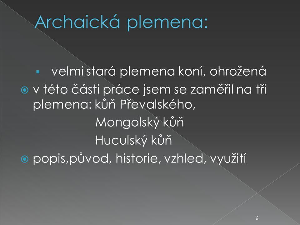 Archaická plemena: velmi stará plemena koní, ohrožená. v této části práce jsem se zaměřil na tři plemena: kůň Převalského,
