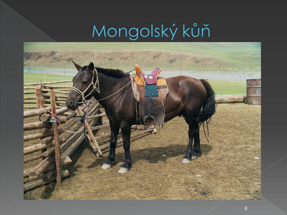 Mongolský kůň