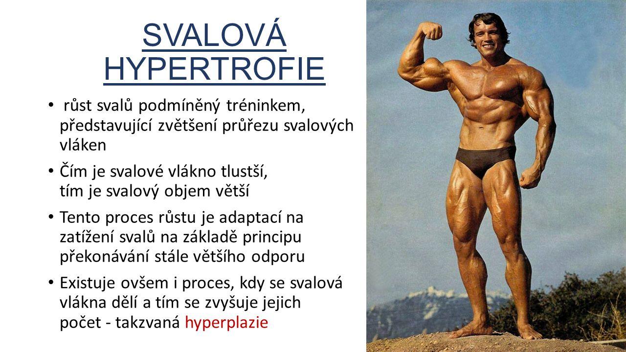 SVALOVÁ HYPERTROFIE růst svalů podmíněný tréninkem, představující zvětšení průřezu svalových vláken.