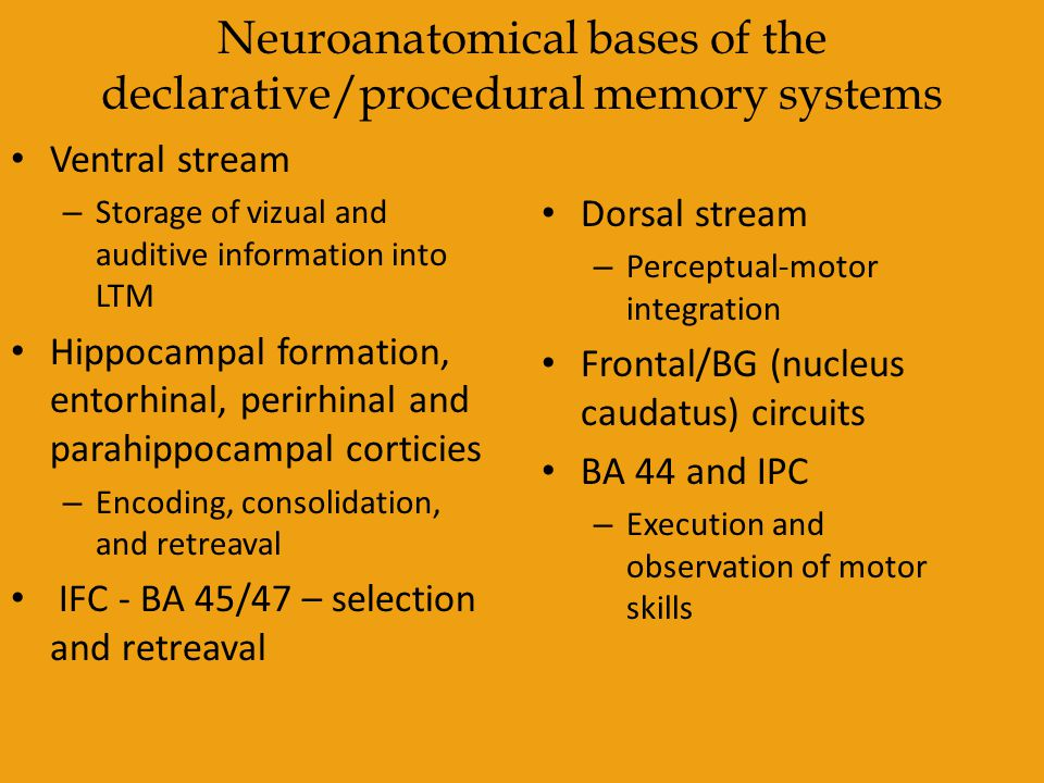 Neuroanatomical bases of the declarative/procedural memory systems