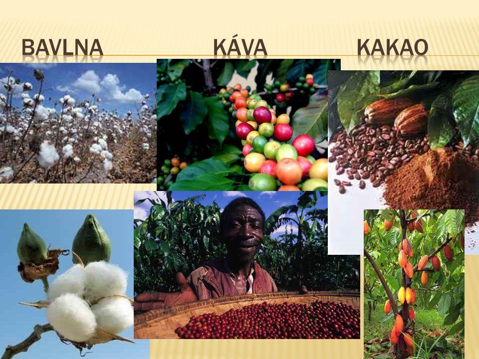 Bavlna káva kakao