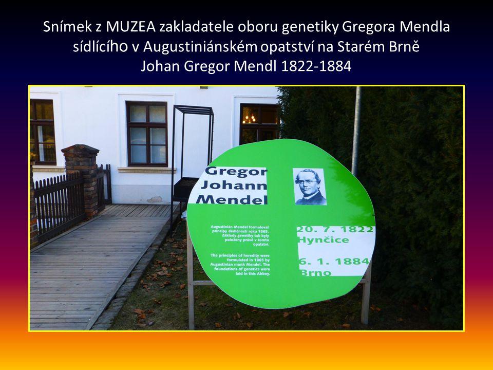 Snímek z MUZEA zakladatele oboru genetiky Gregora Mendla sídlícího v Augustiniánském opatství na Starém Brně Johan Gregor Mendl 1822-1884