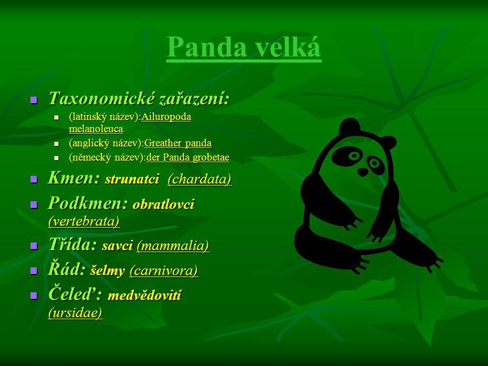 Panda velká Taxonomické zařazení: Kmen: strunatci (chardata)