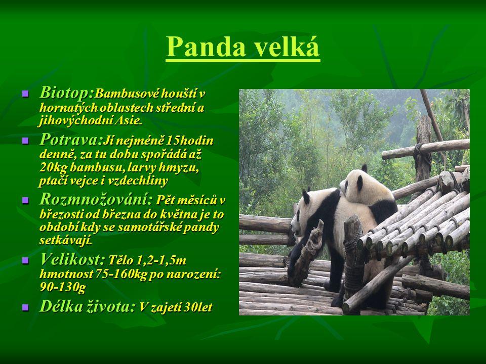 Panda velká Biotop:Bambusové houští v hornatých oblastech střední a jihovýchodní Asie.
