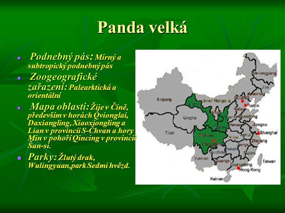 Panda velká Parky: Žlutý drak, Wulingyuan,park Sedmi hvězd.