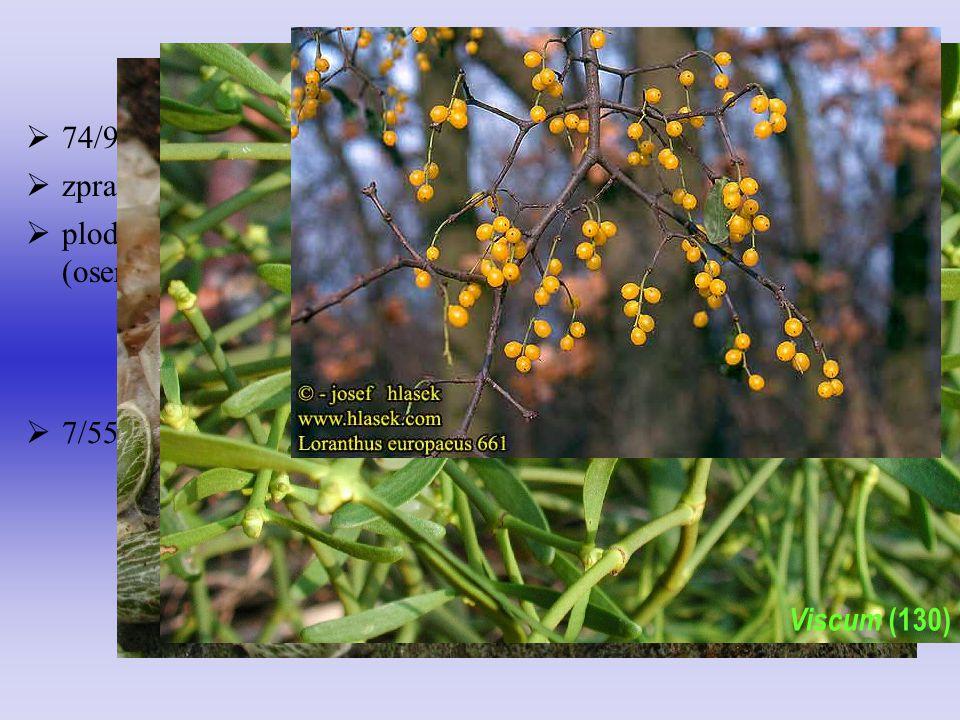 Loranthaceae Viscaceae