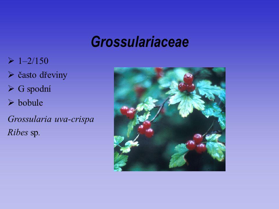 Grossulariaceae 1–2/150 často dřeviny G spodní bobule
