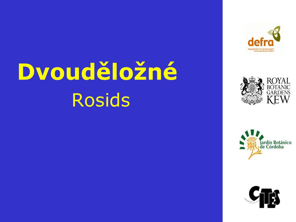 Dvouděložné Rosids Slide 1: CITES and Plants