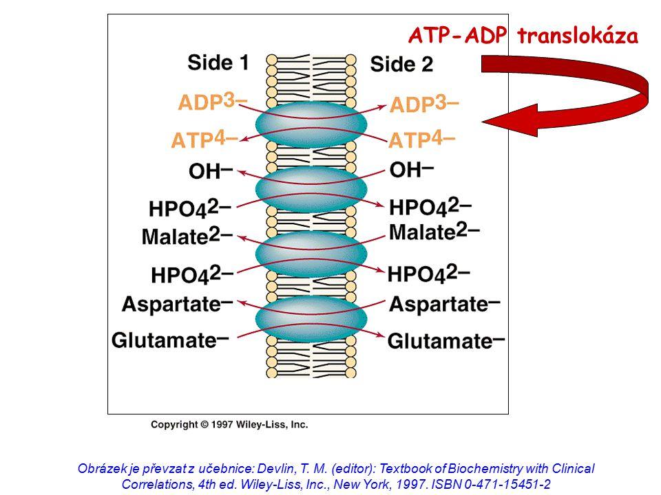 ATP-ADP translokáza