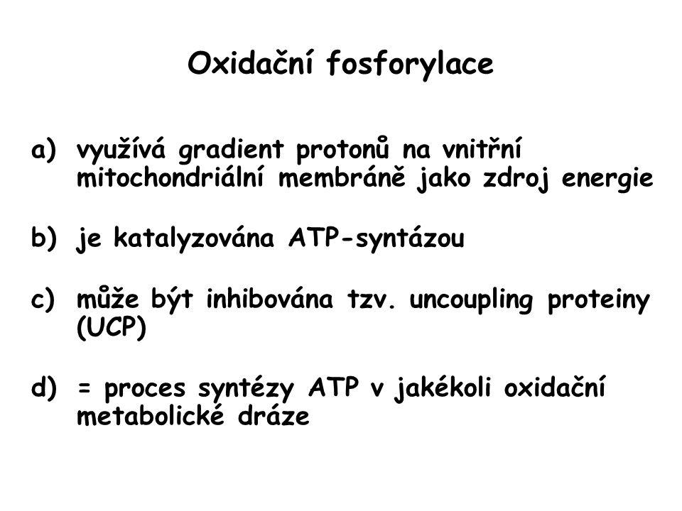 Oxidační fosforylace využívá gradient protonů na vnitřní mitochondriální membráně jako zdroj energie.