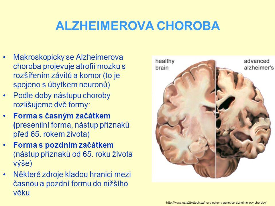 ALZHEIMEROVA CHOROBA Makroskopicky se Alzheimerova choroba projevuje atrofií mozku s rozšířením závitů a komor (to je spojeno s úbytkem neuronů)