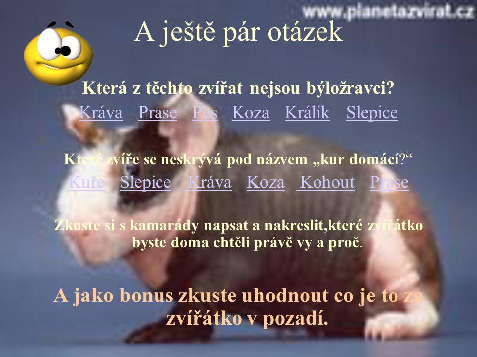 A ještě pár otázek Která z těchto zvířat nejsou býložravci Kráva Prase Pes Koza Králík Slepice.