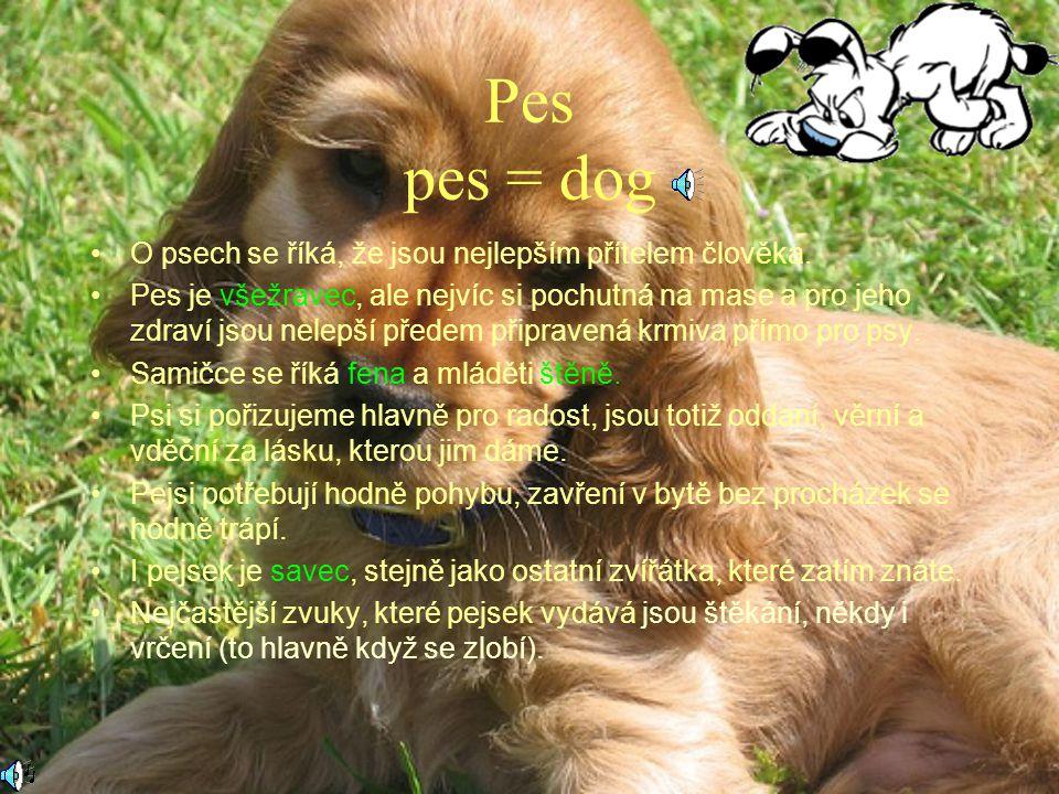 Pes pes = dog O psech se říká, že jsou nejlepším přítelem člověka.