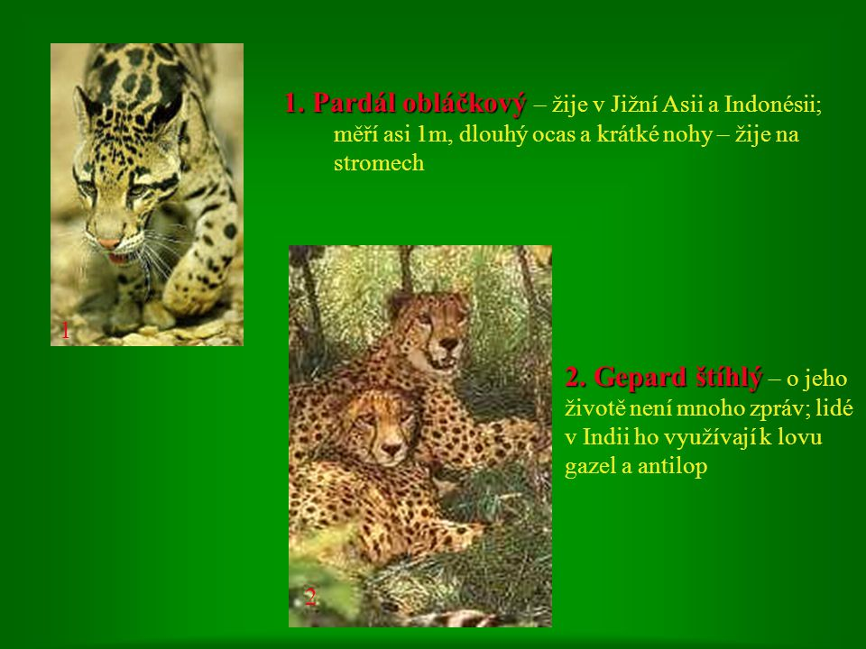 1 1. Pardál obláčkový – žije v Jižní Asii a Indonésii; měří asi 1m, dlouhý ocas a krátké nohy – žije na stromech.