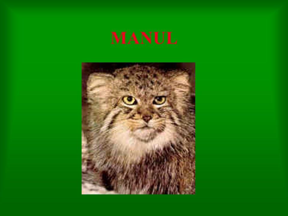 MANUL