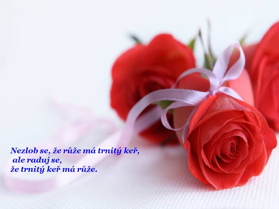 Nezlob se, že růže má trnitý keř,