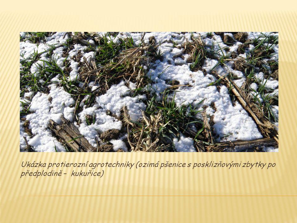 Ukázka protierozní agrotechniky (ozimá pšenice s posklizňovými zbytky po předplodině – kukuřice)