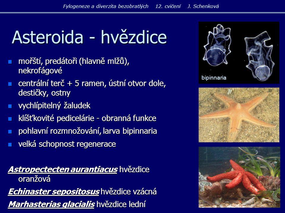 Fylogeneze a diverzita bezobratlých 12. cvičení J. Schenková