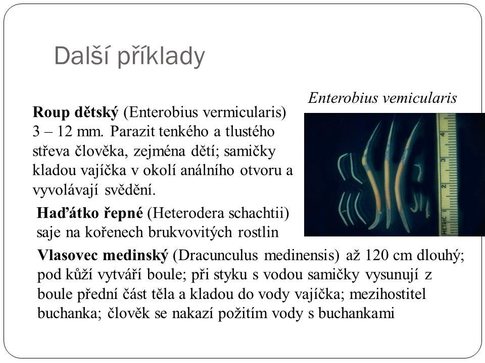 Další příklady Enterobius vemicularis