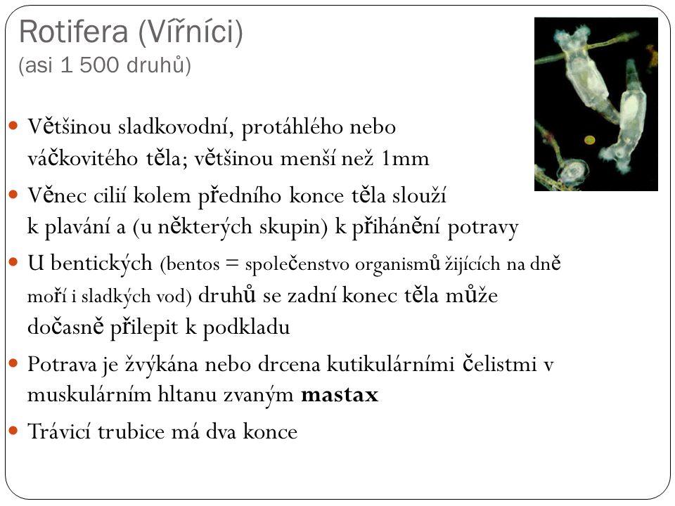 Rotifera (Vířníci) (asi 1 500 druhů)