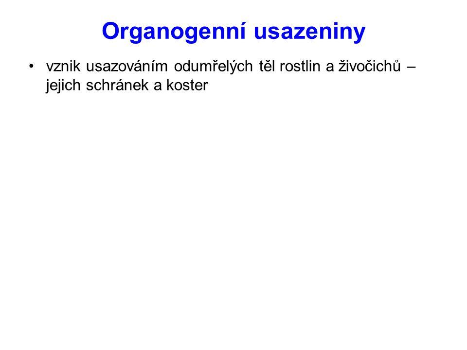 Organogenní usazeniny