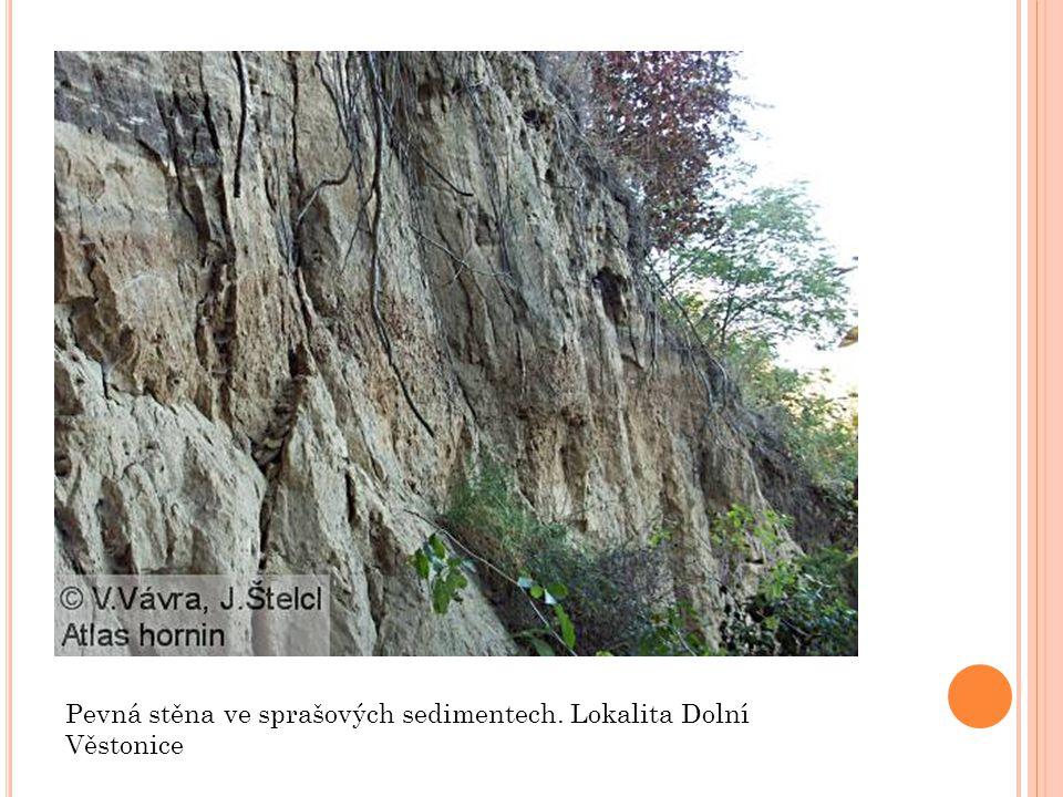 Pevná stěna ve sprašových sedimentech. Lokalita Dolní Věstonice