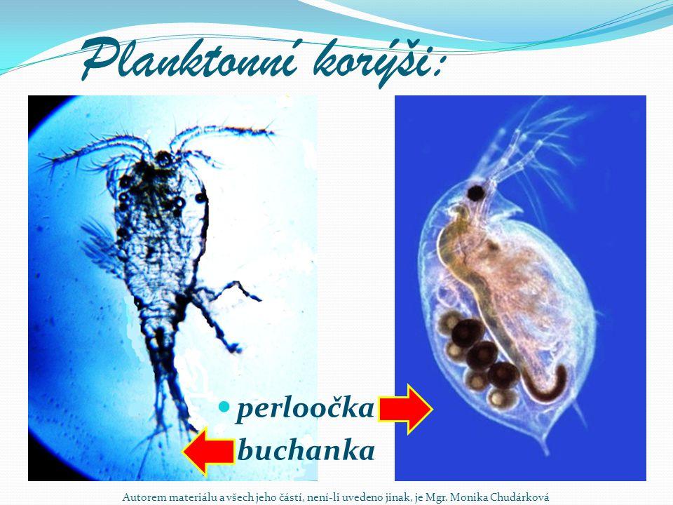 Planktonní korýši: perloočka buchanka