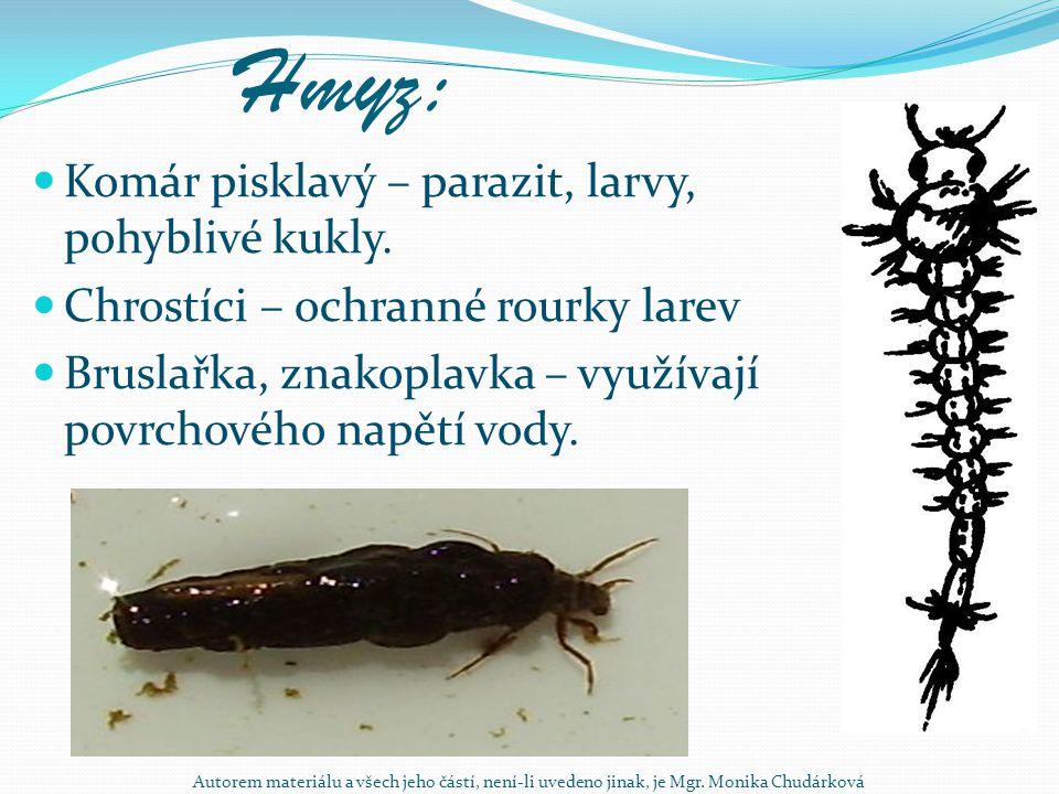 Hmyz: Komár pisklavý – parazit, larvy, pohyblivé kukly.