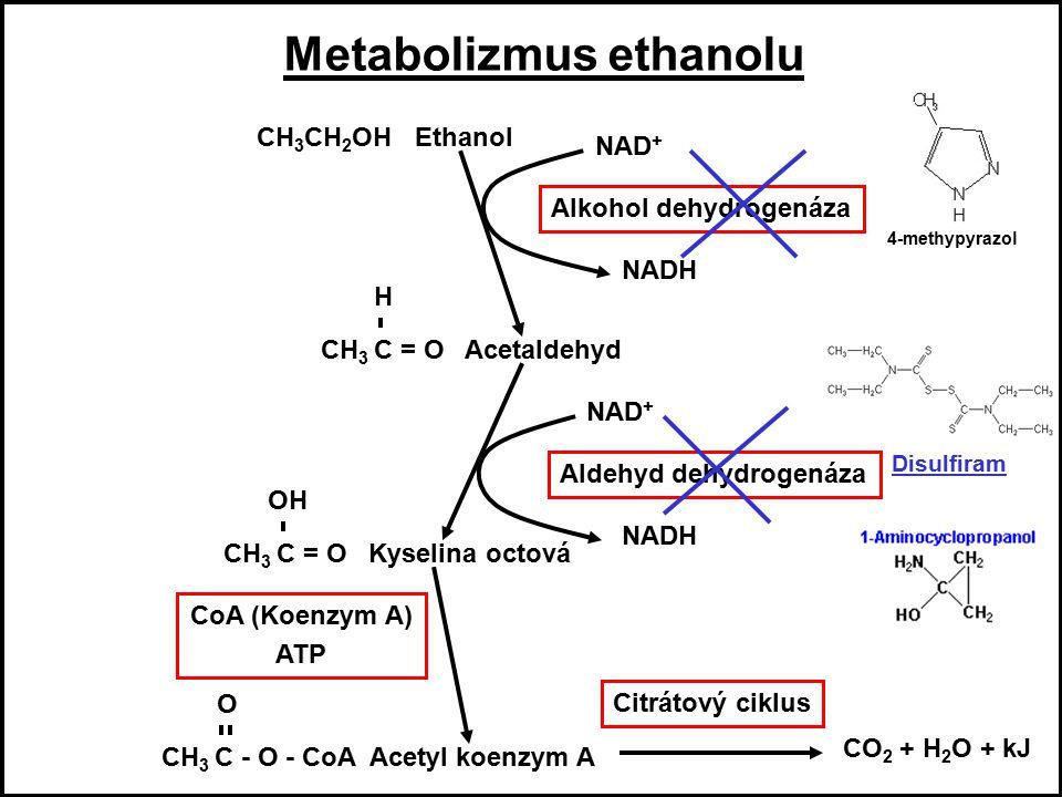 Metabolizmus ethanolu Metabolizmus ethanolu Metabolizmus ethanolu