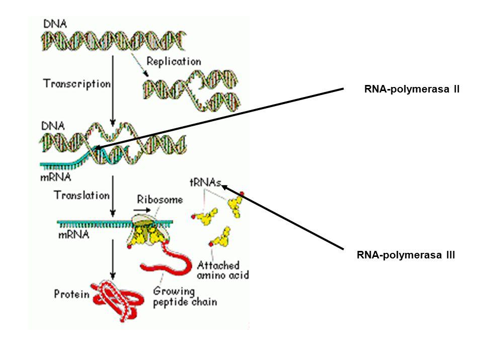 Muchomůrka zelená Toxické látky Amatoxiny Játra Žlučník Žlučovod